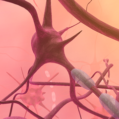 VEV Cerebrospinal Fluid Neurons // Stage 4 Dynamic Theme
