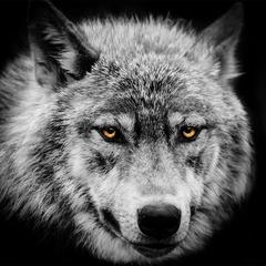XPOSED - Wild Wolf Avatar