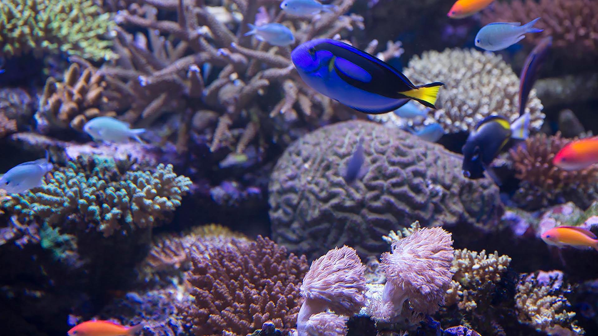 Buceo en la gran barrera de coral de David Attenborough